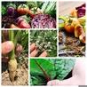 マハロ MAHALO Vegetable Dining 天神大名のおすすめポイント1