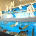 【店内に生簀を完備】新鮮な魚介類がご準備してお待ちしております♪※季節や天候により内容が変わります。店内でお気軽にお問い合わせください。