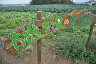 野菜はすべて無農薬野菜!