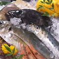 【近海の地魚】新潟の名物!地魚のお刺身などもご用意しております