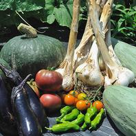 《自家栽培の新鮮食材》