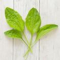 ◆オオバコ◆人に踏まれるような場所に生える強い生命力のある草です。苦味やアクがなく、食べやすい味わいです。利尿、むくみ改善、咳止めなどの薬効があると言われています。
