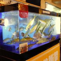 店内奥の水槽は要チェック!お好きな魚を捌きます★