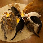 SAVE CAT CAFEの雰囲気2