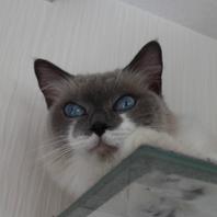 猫の民宿・シャンプーも大人気!