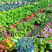自家栽培の無農薬野菜!