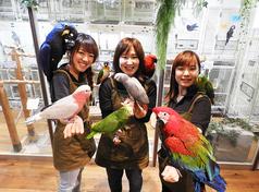 鳥とふれあえるカフェ The Step Up Osaka by えとぴりかの写真
