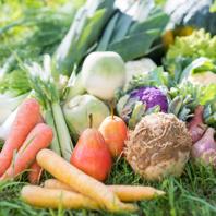 その日の入荷や、季節に応じた食材を使用した料理