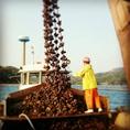 広島名産の牡蠣も久保水産から直送!単品でもコースでも楽しめます!