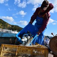 漁港と直結の海鮮居酒屋