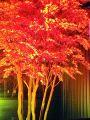 紅 吉田の雰囲気1