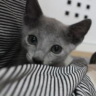 人懐っこい猫スタッフが多数☆