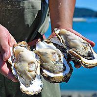 漁師の想いが詰まった、自慢の三陸育ちの新鮮牡蠣!