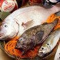 旬の魚、続々入荷中!伊勝苑では季節ごとの鮮魚を仕入れてリーズナブルにご提供!活け造りも可能!