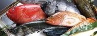 豊洲から仕入れる新鮮な魚介が自慢!