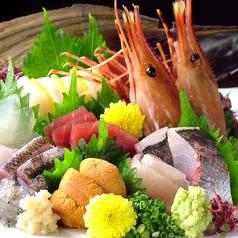 魚魚一の写真