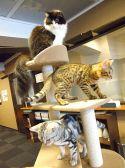 猫カフェ きゃりこ 新宿店の雰囲気2
