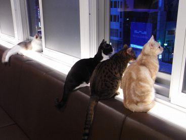 猫カフェ きゃりこ 新宿店の雰囲気1