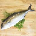 料理メニュー写真カンパチ刺し(千葉県)