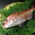 料理メニュー写真真鯛刺し(青森県)