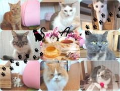 猫カフェ スマイルアゲインの写真