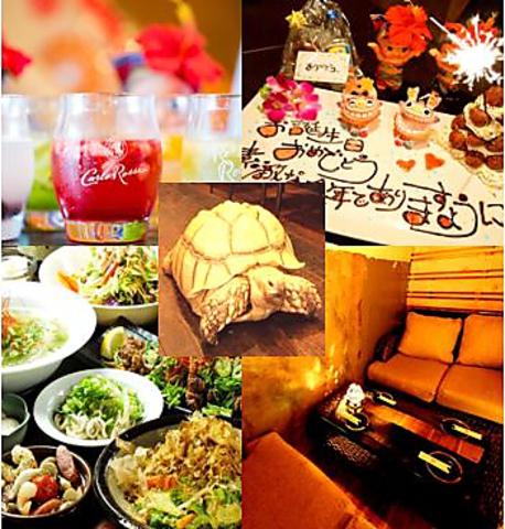 Okinawa bimiryori kuwacchi image