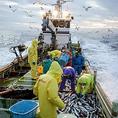 日本各地の地魚や築地海鮮をご賞味ください。