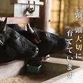 一頭、一頭大切に育てています。ストレスフリーな環境で育てています。良い肉、旨い肉、宮崎牛。