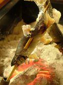 囲炉裏亭 味都のおすすめ料理2