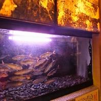 水槽から取り出す活魚が自慢