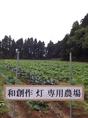 専用農園からとれる新鮮野菜は必食です!完全無農薬な有機野菜を各種料理に使用しています!