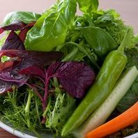 【赤坂で新鮮野菜】契約農家直送季節の野菜15種以上