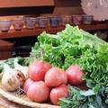 料理メニュー写真朝採れ無農薬野菜