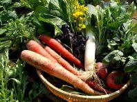 こだわり有機野菜
