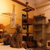 【個室】ペットを飼っている部屋【猫ルーム】もございます。原価でフードやドリンクをお楽しみ下さい。またどのようなことでも一度お問合せ下さいできる限り、ご相談にお乗りします。お待ちしております。