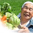 海鮮だけでなく、新鮮野菜も契約農家より直送!【ベビーリーフ】◆生産者:菅原農産◆土耕で栽培されているので、味が濃く日持ちも◎!【ネギ】◆生産者:伊藤農園◆ 伊藤農園のネギは、焼くと18度までの糖度があり、ブドウやメロンと同じくらいの甘さ。美味しさを追求したネギを栽培されています!