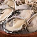 料理メニュー写真活〆牡蠣 1個