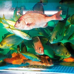 美しい新鮮なお魚たちが泳ぐいけす!うおや一丁ではリーズナブルな価格で本格海鮮料理をご賞味頂けます!味・ボリューム・価格全てに自信あり★逸品料理や飲み放題付宴会コースも多数ご用意致しておりますので、是非メニューページをご覧くださいませ!