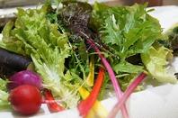 サラダ野菜は美味しさ満点