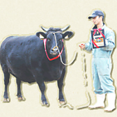 【オススメ4】伊賀で生まれ育つ、黒牛!味への追求が赤身に凝縮!