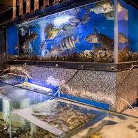 全国の漁港より届いた旬の魚が泳ぐ生簀がございます