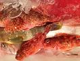 【産地にこだわりを持って】魚介は山口県 萩・大島から取り寄せ、その新鮮さと抜群のうまさは是非お造りでお楽しみください。もちろん季節の魚料理も見逃せません。秋は脂がのった秋刀魚が美味しいので是非、刺身でも塩焼きでもお好きな食べ方をお選びください。