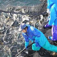 天草から新鮮な魚を産地直送!