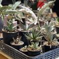 店内には至るところに観葉植物が♪ 植物が持つ癒しの効果で、お客様のひと時を特別な時間にしてくれます。