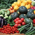 普賢岳のふもと、豊かな土ときれいなお水、農業に適した環境で育ったお野菜たち