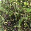 料理メニュー写真木の芽
