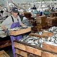 天草鮮魚市場、毎日大量の魚が集まりそこから選りすぐりの魚を送って頂いています。