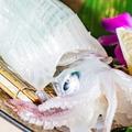 料理メニュー写真イカの姿造り