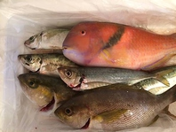 脂がのってしっかり身の引き締まった旬の魚をどうぞ!