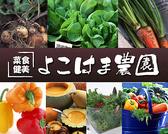 横浜農園の写真